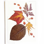 Pressed leaf and flower card